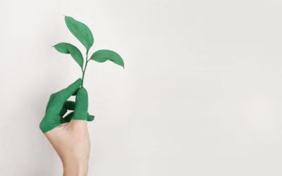 Go Green & Save Green: Convert To A Green Office